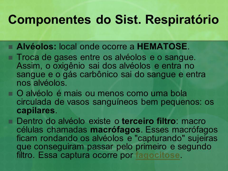 Componentes do Sist. Respiratório  Alvéolos: local onde ocorre a HEMATOSE.  Troca de gases entre os alvéolos e o sangue. Assim, o oxigênio sai dos a