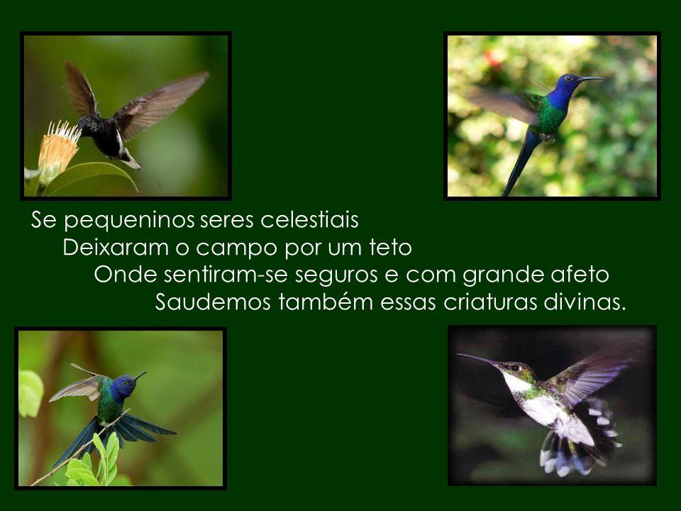 Na vida somos também um beija-flor Procurando uma mão amiga E uma voz afável que nos diga: __ Bem-vindo! E nos acolham com amor.