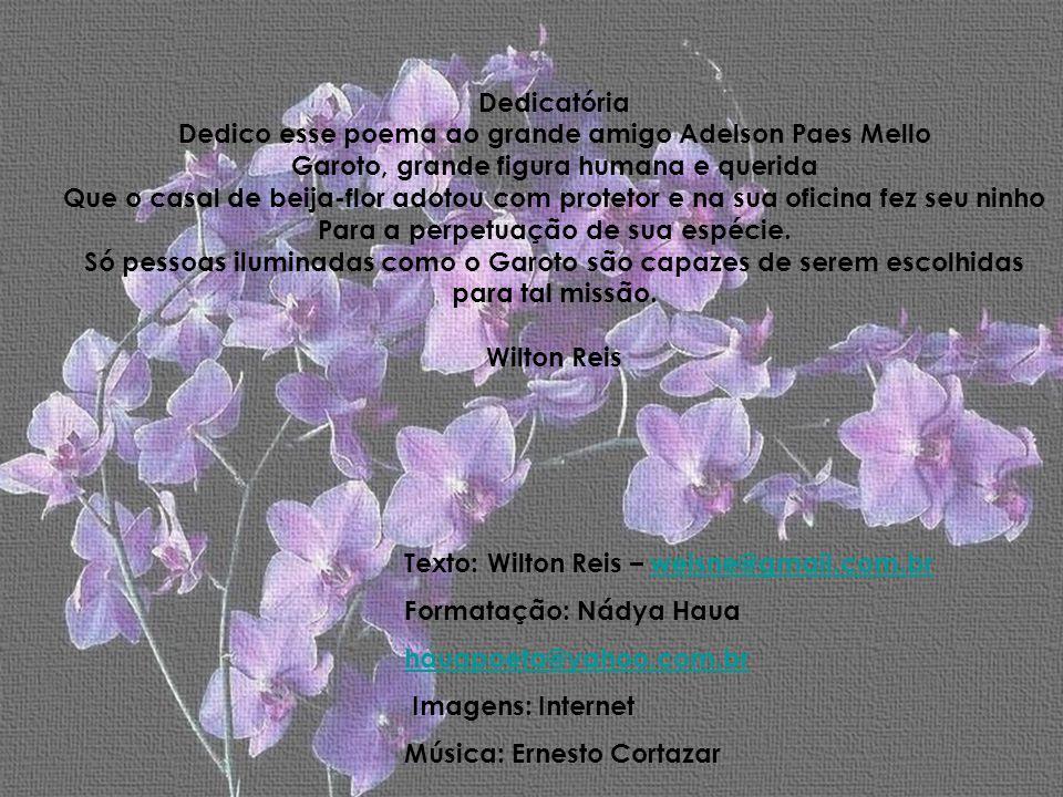 Dedicatória Dedico esse poema ao grande amigo Adelson Paes Mello Garoto, grande figura humana e querida Que o casal de beija-flor adotou com protetor e na sua oficina fez seu ninho Para a perpetuação de sua espécie.