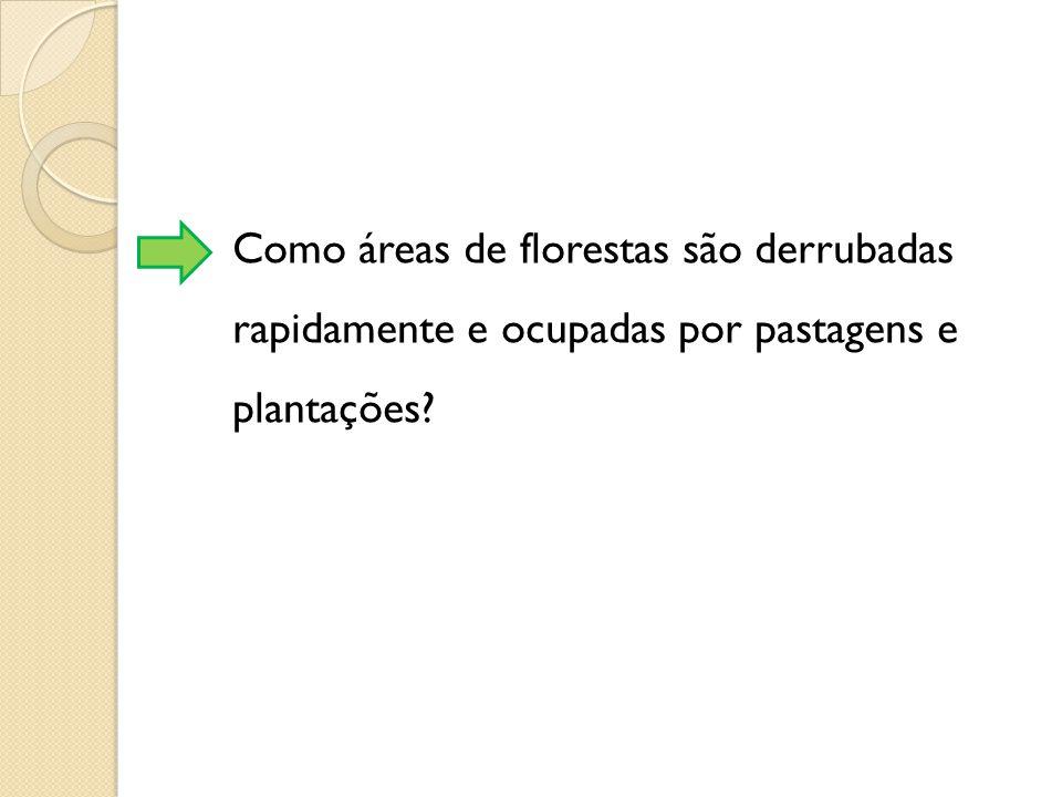Como áreas de florestas são derrubadas rapidamente e ocupadas por pastagens e plantações?