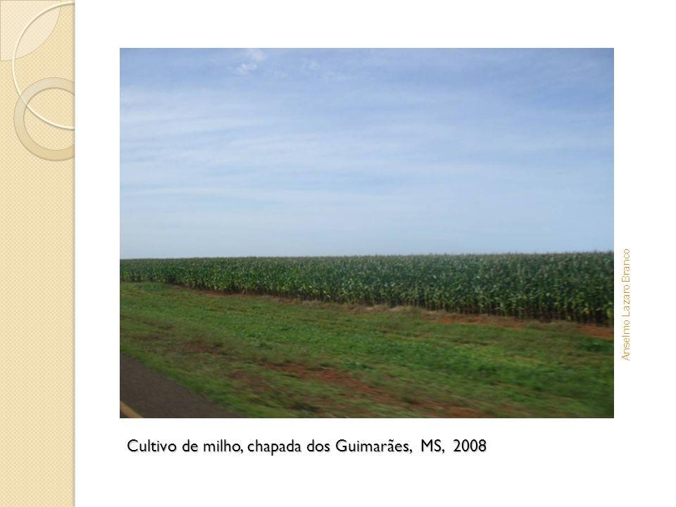 Cultivo de milho, chapada dos Guimarães, MS, 2008 Anselmo Lazaro Branco