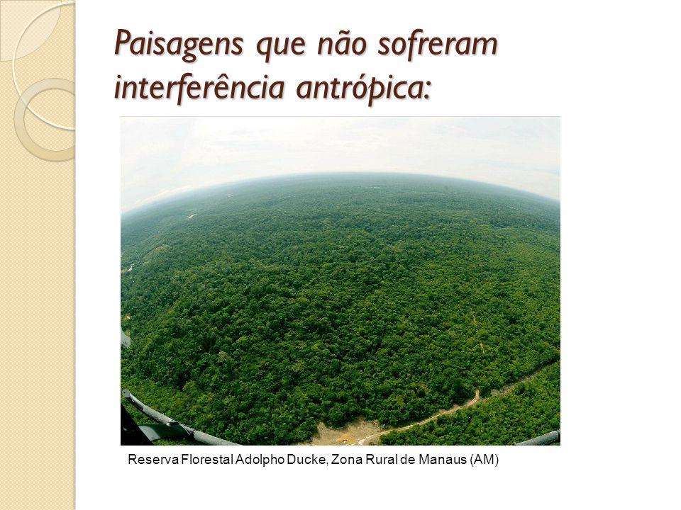 Paisagens que não sofreram interferência antrópica: Reserva Florestal Adolpho Ducke, Zona Rural de Manaus (AM)