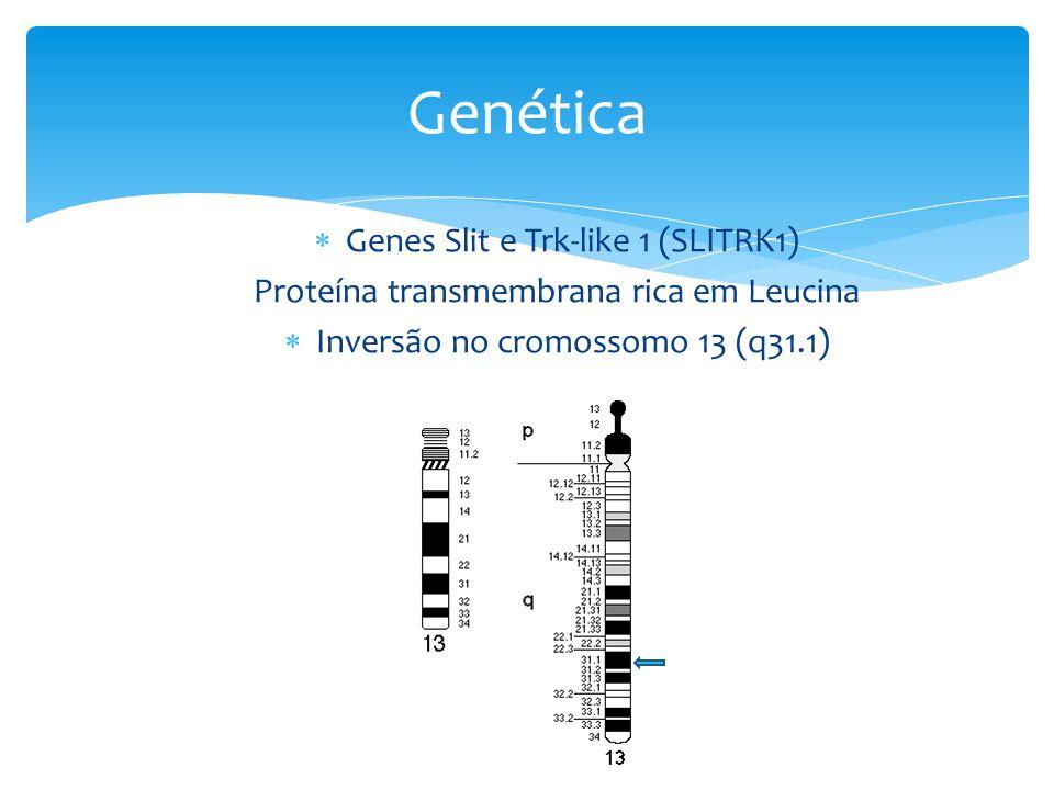  Genes Slit e Trk-like 1 (SLITRK1) Proteína transmembrana rica em Leucina  Inversão no cromossomo 13 (q31.1) Genética