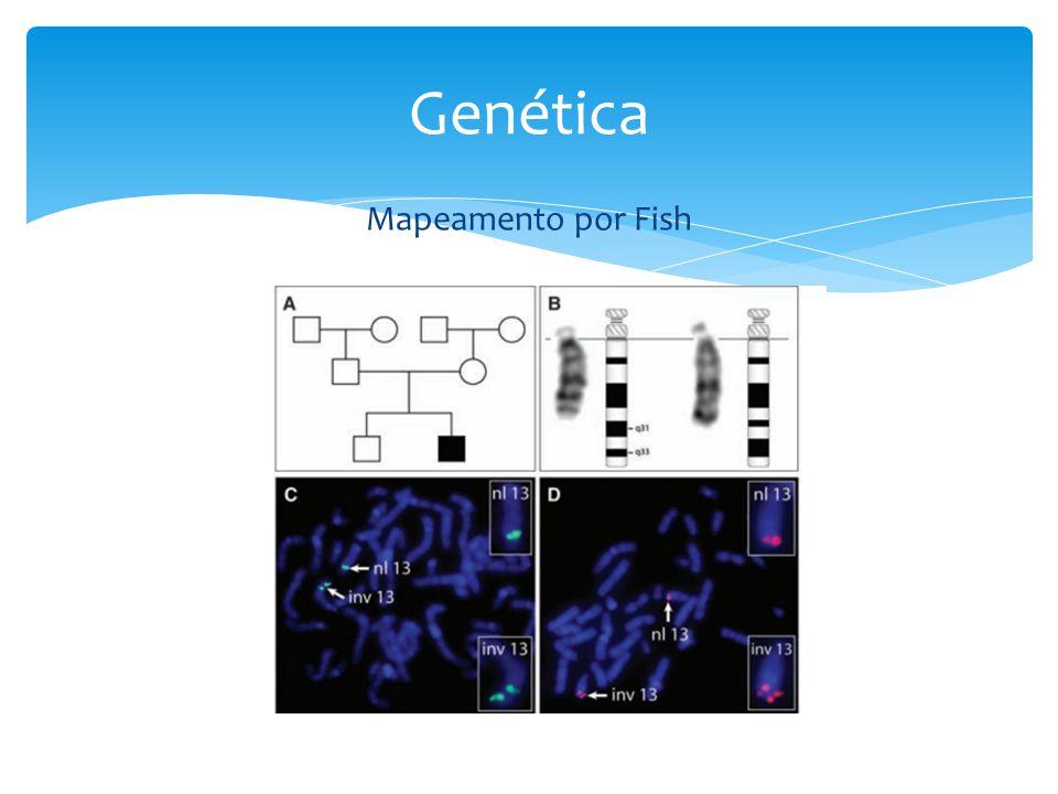 Mapeamento por Fish Genética
