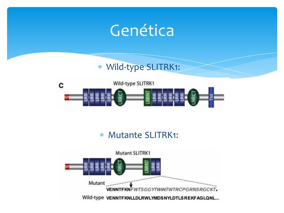  Wild-type SLITRK1:  Mutante SLITRK1: Genética
