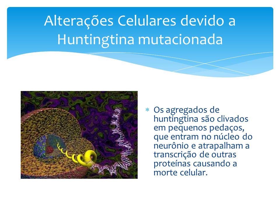 Alterações Celulares devido a Huntingtina mutacionada  Os agregados de huntingtina são clivados em pequenos pedaços, que entram no núcleo do neurônio e atrapalham a transcrição de outras proteínas causando a morte celular.