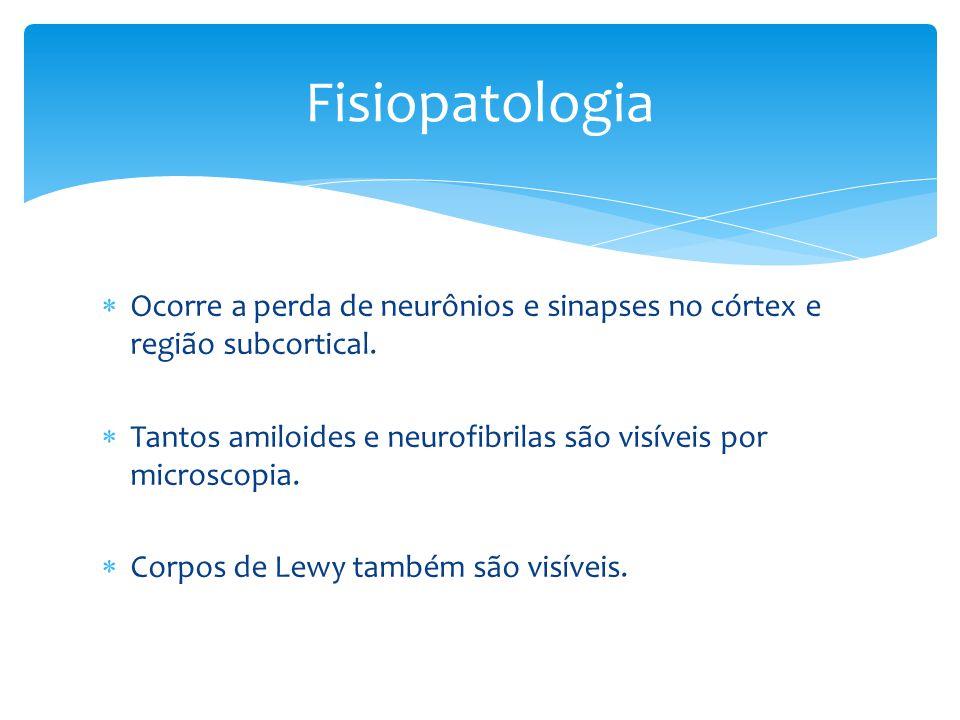  Ocorre a perda de neurônios e sinapses no córtex e região subcortical.