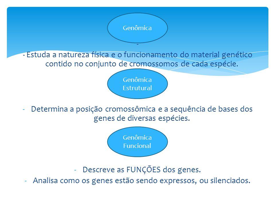 – - - Estuda a natureza física e o funcionamento do material genético contido no conjunto de cromossomos de cada espécie.