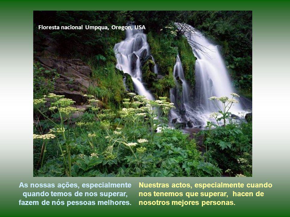 Floresta nacional Umpqua, Oregon, USA As nossas ações, especialmente quando temos de nos superar, fazem de nós pessoas melhores.