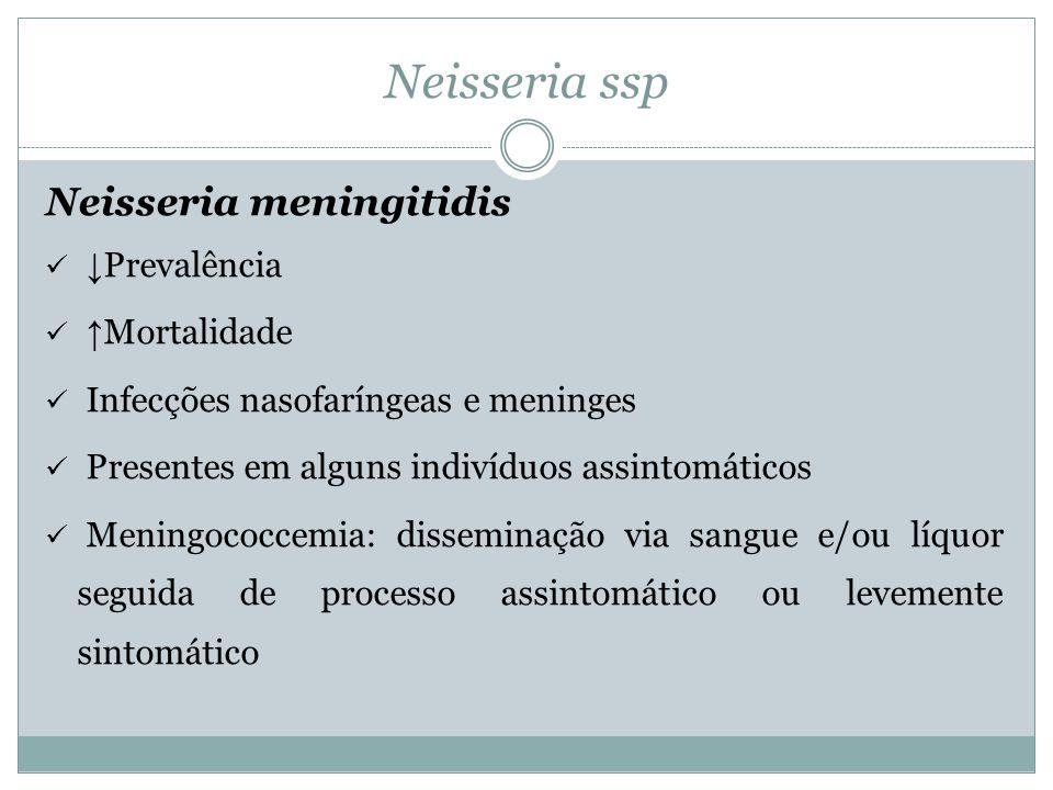 Neisseria ssp Neisseria meningitidis  ↓ Prevalência  ↑ Mortalidade  Infecções nasofaríngeas e meninges  Presentes em alguns indivíduos assintomáti