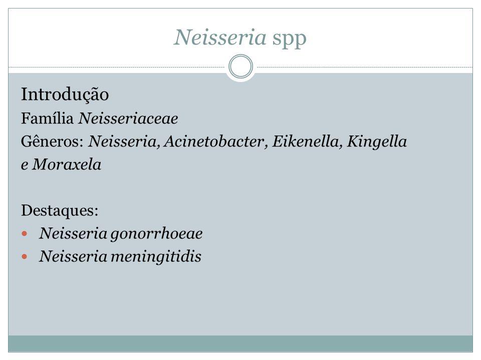 Neisseria spp Introdução Família Neisseriaceae Gêneros: Neisseria, Acinetobacter, Eikenella, Kingella e Moraxela Destaques:  Neisseria gonorrhoeae 