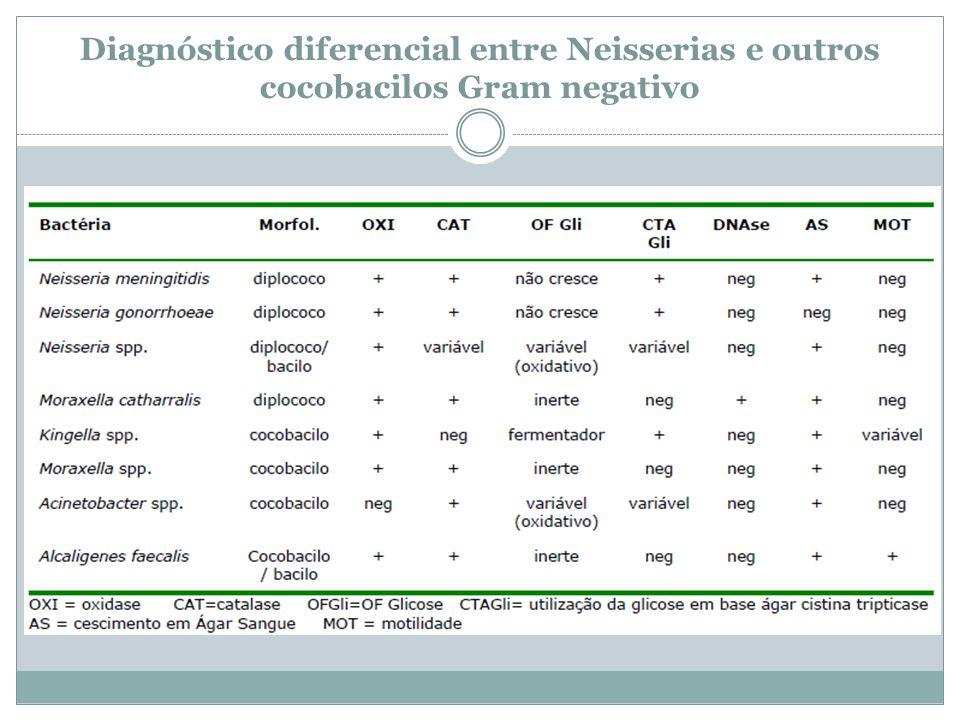 Diagnóstico diferencial entre Neisserias e outros cocobacilos Gram negativo