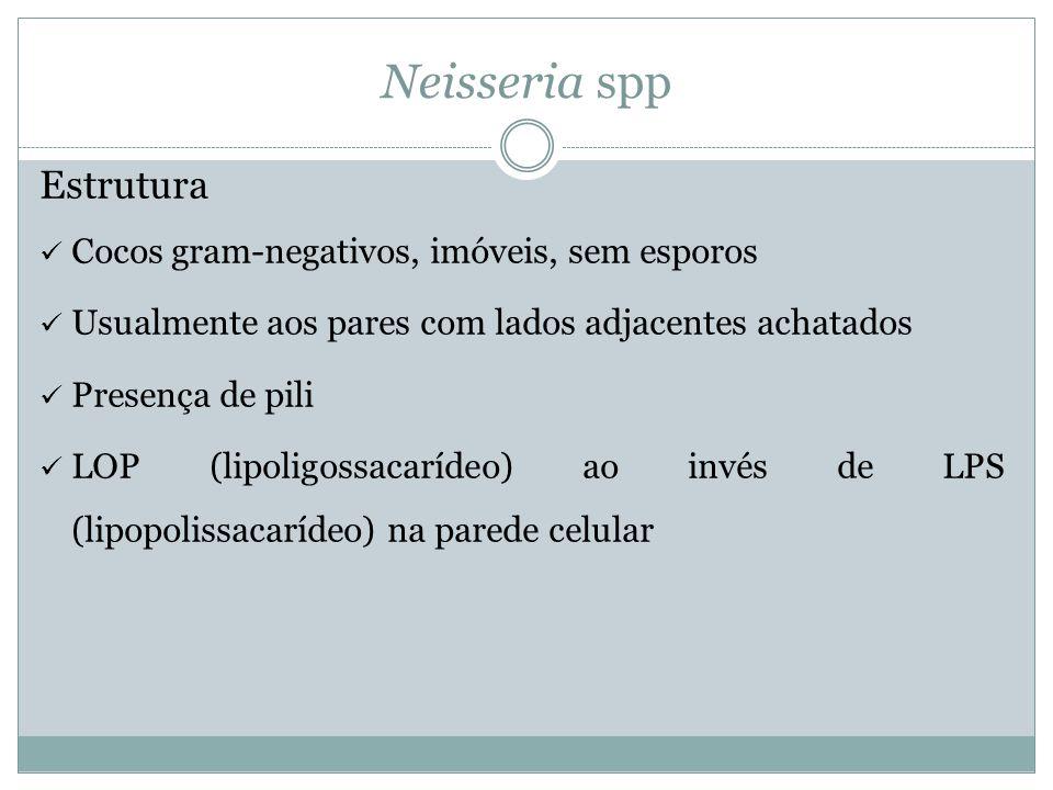 Neisseria spp