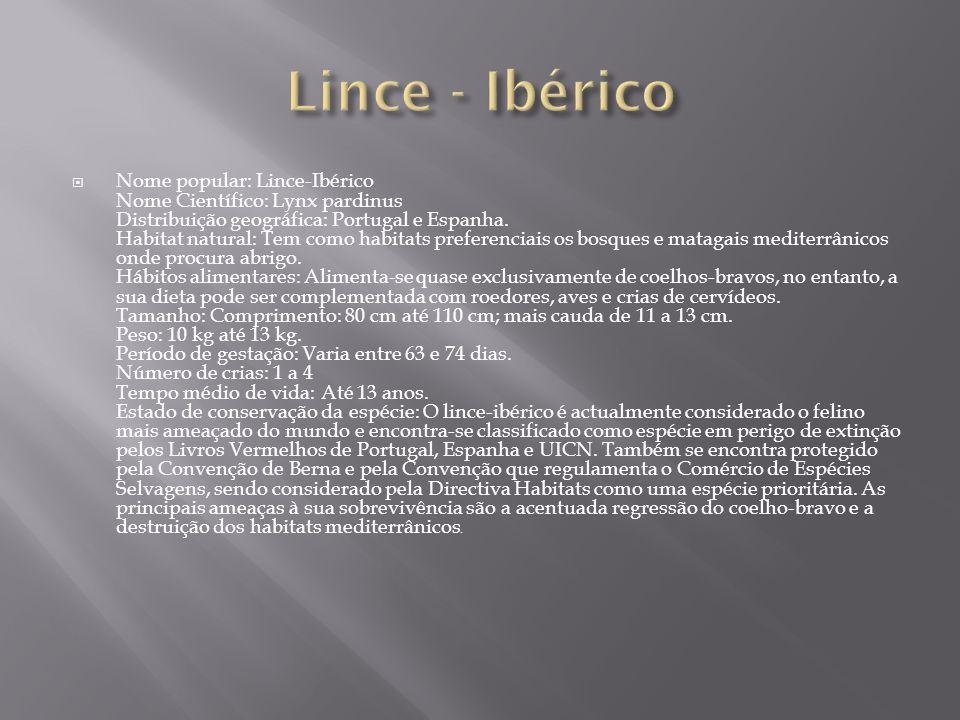  Nome popular: Lince-Ibérico Nome Científico: Lynx pardinus Distribuição geográfica: Portugal e Espanha. Habitat natural: Tem como habitats preferenc