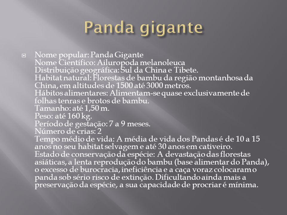  Nome popular: Panda Gigante Nome Científico: Ailuropoda melanoleuca Distribuição geográfica: Sul da China e Tibete. Habitat natural: Florestas de ba
