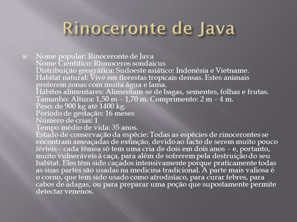  Nome popular: Rinoceronte de Java Nome Científico: Rhinoceros sondaicus Distribuição geográfica: Sudoeste asiático: Indonésia e Vietname. Habitat na
