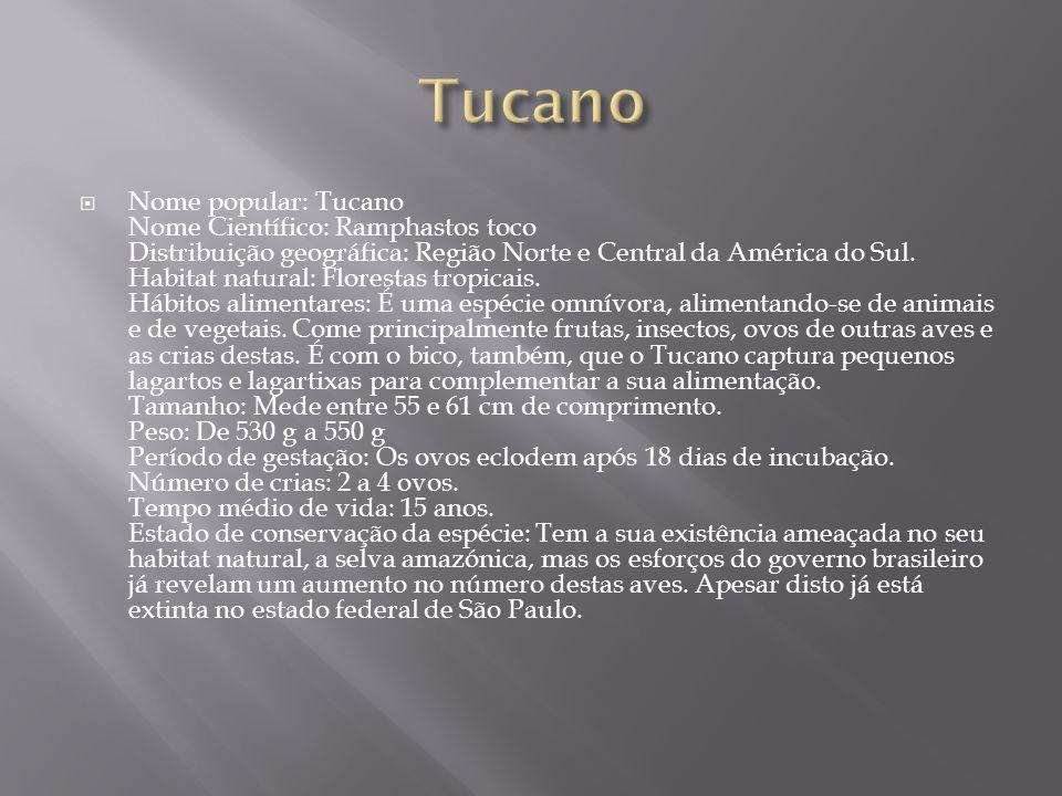  Nome popular: Tucano Nome Científico: Ramphastos toco Distribuição geográfica: Região Norte e Central da América do Sul. Habitat natural: Florestas
