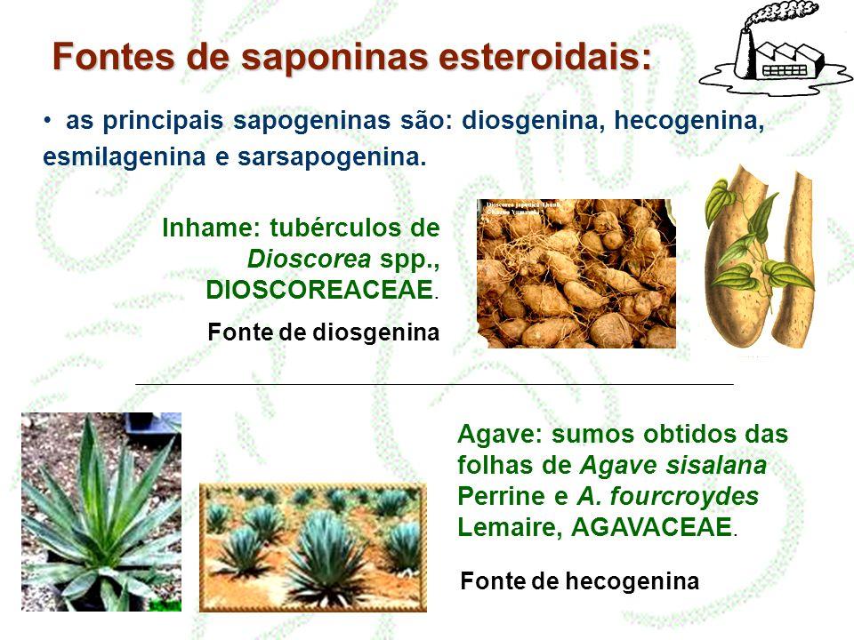 Fontes de saponinas esteroidais: • as principais sapogeninas são: diosgenina, hecogenina, esmilagenina e sarsapogenina. Inhame: tubérculos de Dioscore