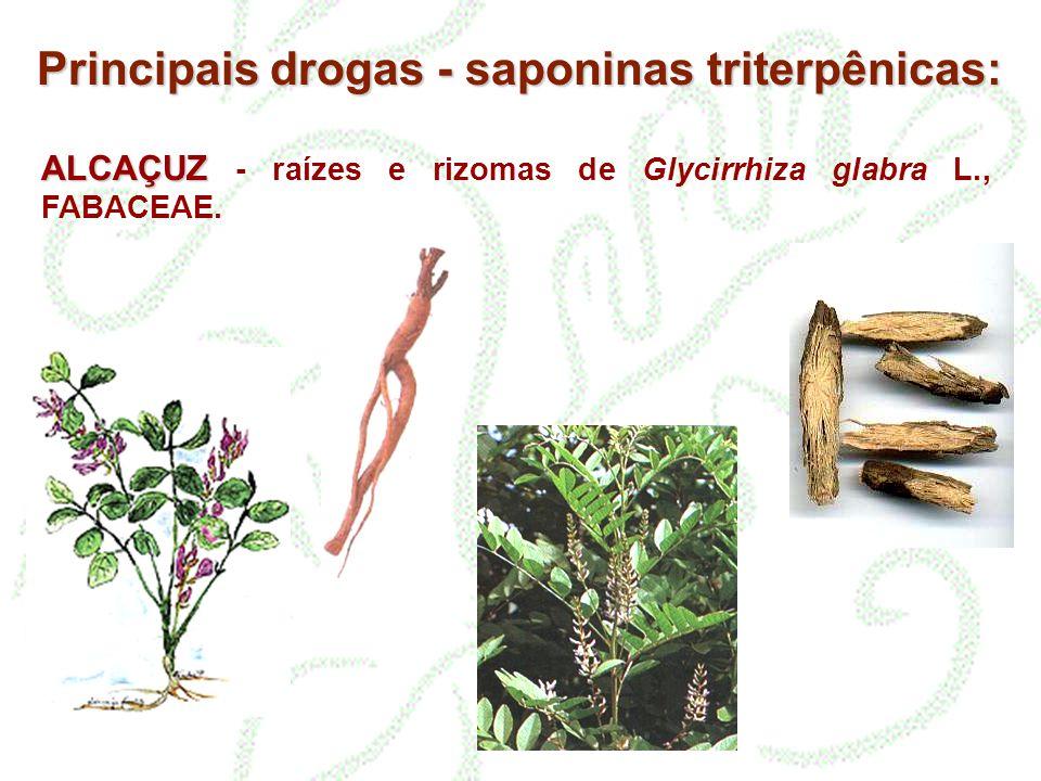 ALCAÇUZ ALCAÇUZ - raízes e rizomas de Glycirrhiza glabra L., FABACEAE. Principais drogas - saponinas triterpênicas:
