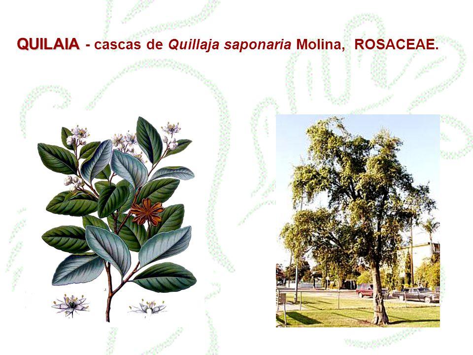 QUILAIA QUILAIA - cascas de Quillaja saponaria Molina, ROSACEAE.