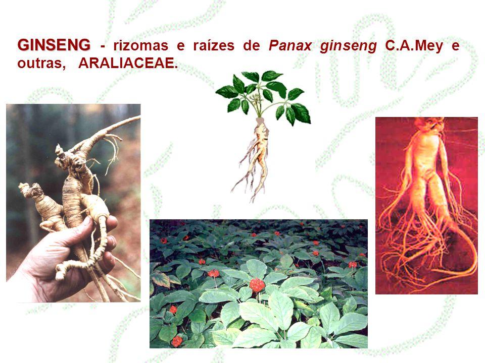 GINSENG GINSENG - rizomas e raízes de Panax ginseng C.A.Mey e outras, ARALIACEAE.