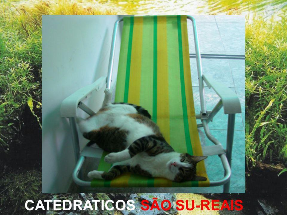 CATEDRATICOS SÃO SU-REAIS