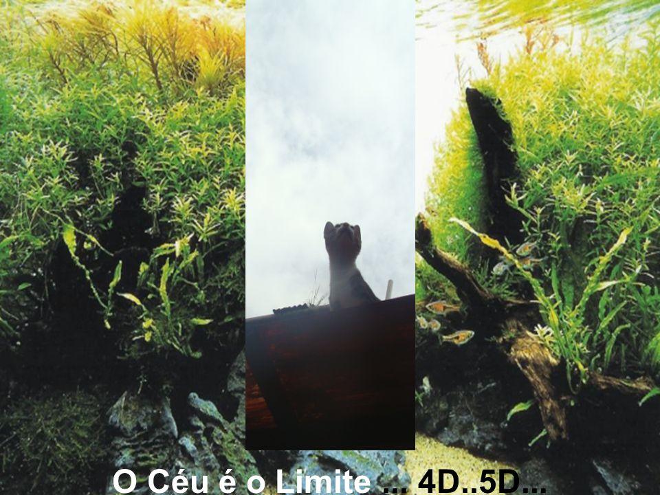 O Céu é o Limite... 4D..5D...