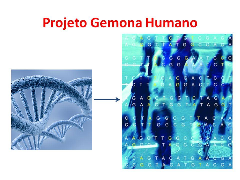 Projeto Gemona Humano Objetivos • Determinar a sequência de todos os nucleotídeos do DNA humano, identificar e localizar os genes.