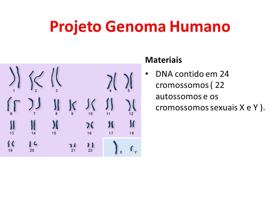 Projeto Genoma Humano Materiais • DNA contido em 24 cromossomos ( 22 autossomos e os cromossomos sexuais X e Y ).
