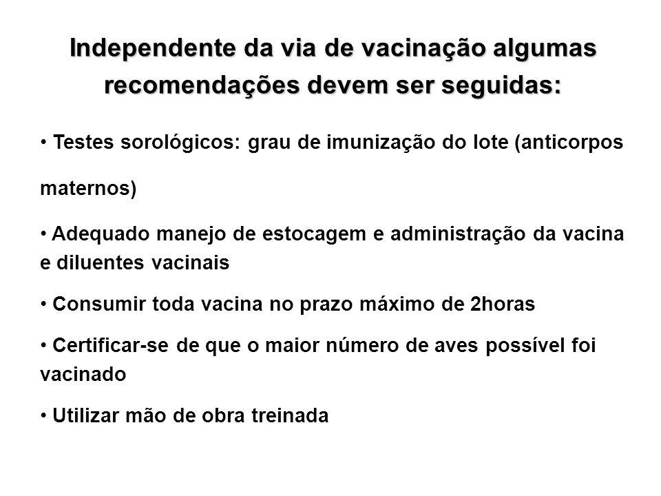 Independente da via de vacinação algumas recomendações devem ser seguidas: • Testes sorológicos: grau de imunização do lote (anticorpos maternos) • Ad