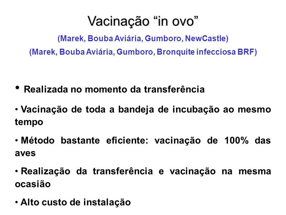 """Vacinação """"in ovo"""" (Marek, Bouba Aviária, Gumboro, NewCastle) (Marek, Bouba Aviária, Gumboro, Bronquite infecciosa BRF) • Realizada no momento da tran"""