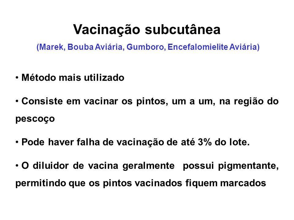 Vacinação subcutânea (Marek, Bouba Aviária, Gumboro, Encefalomielite Aviária) • Método mais utilizado • Consiste em vacinar os pintos, um a um, na reg