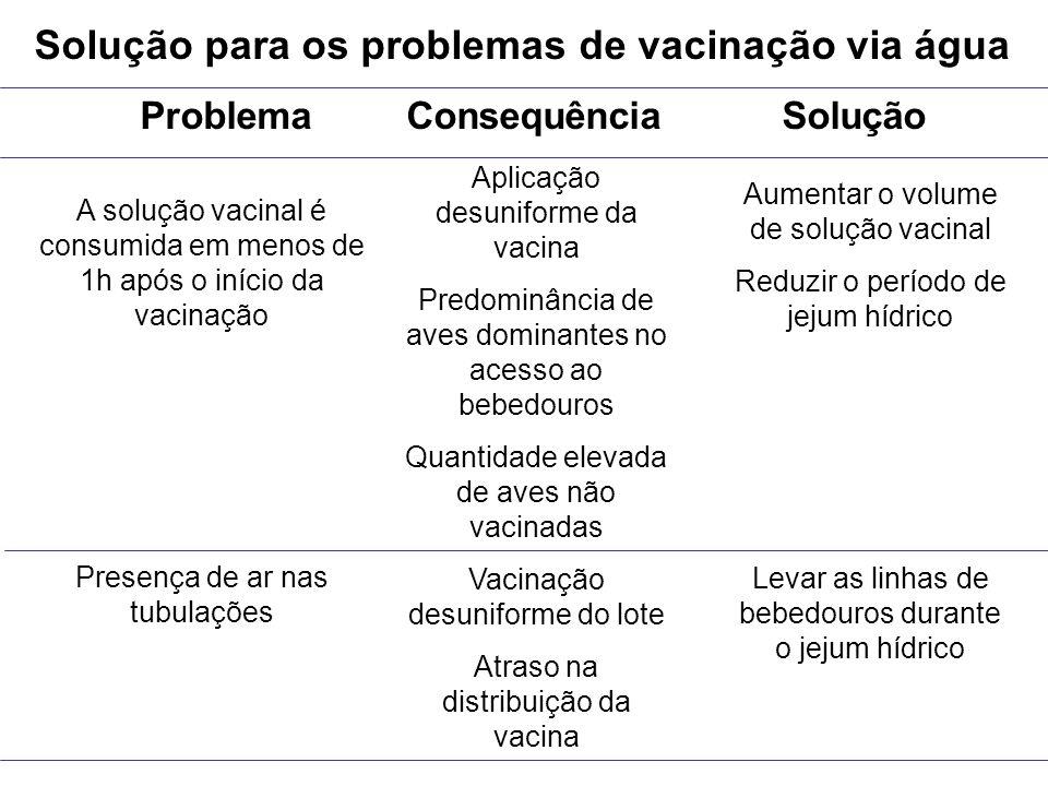 Solução para os problemas de vacinação via água Problema Consequência Solução A solução vacinal é consumida em menos de 1h após o início da vacinação