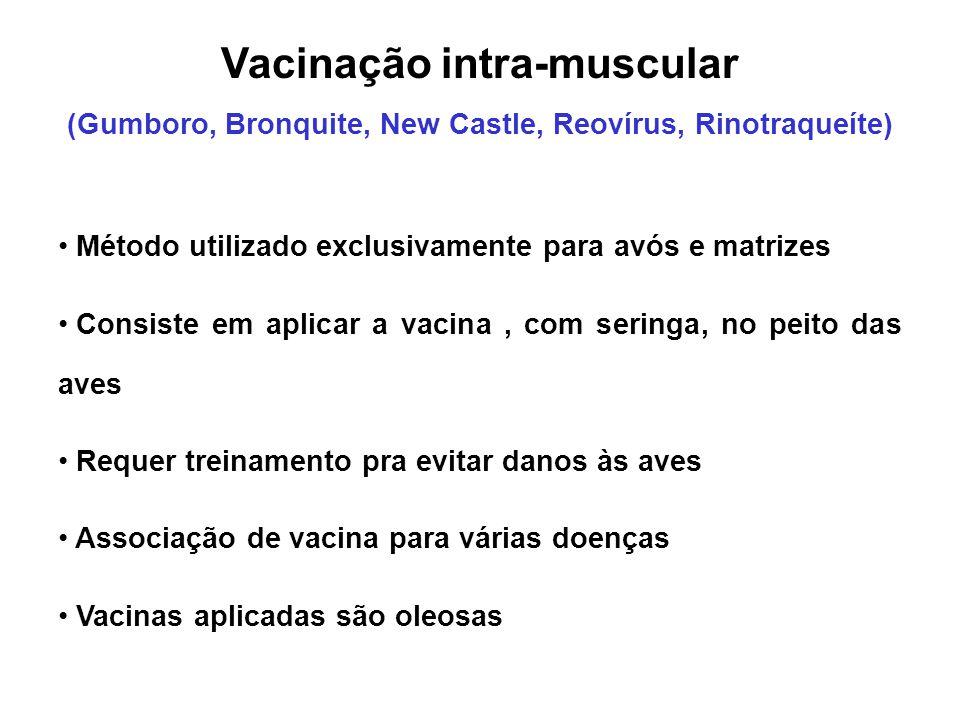 Vacinação intra-muscular (Gumboro, Bronquite, New Castle, Reovírus, Rinotraqueíte) • Método utilizado exclusivamente para avós e matrizes • Consiste e