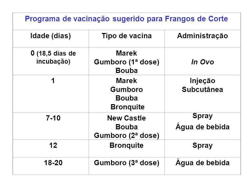 Programa de vacinação sugerido para Frangos de Corte Idade (dias)Tipo de vacinaAdministração 0 (18,5 dias de incubação) Marek Gumboro (1ª dose) Bouba
