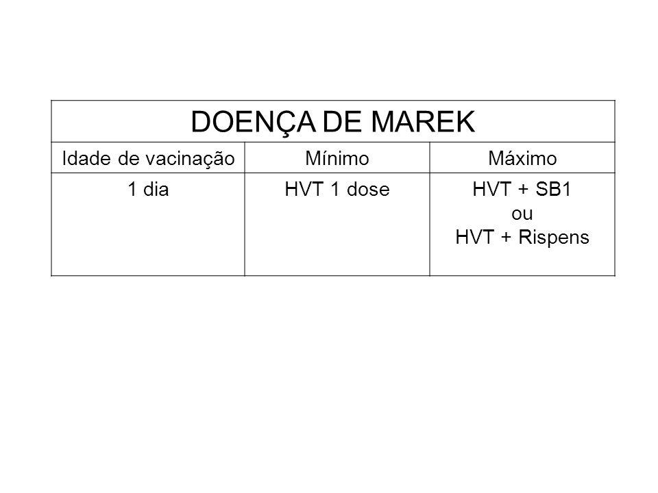 DOENÇA DE MAREK Idade de vacinaçãoMínimoMáximo 1 diaHVT 1 doseHVT + SB1 ou HVT + Rispens