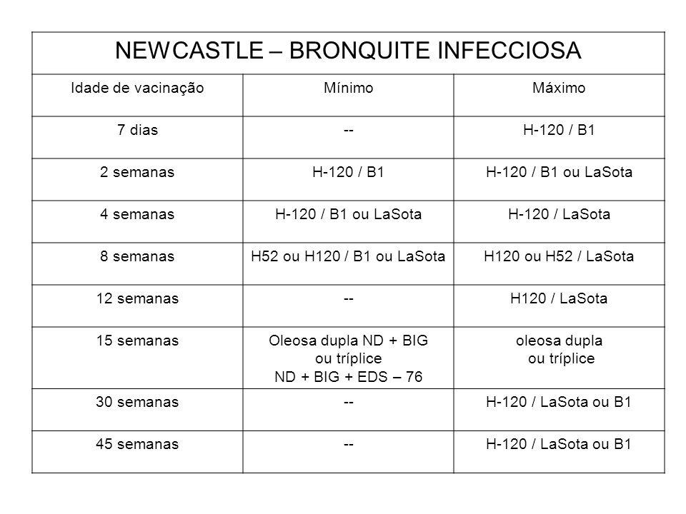 NEWCASTLE – BRONQUITE INFECCIOSA Idade de vacinaçãoMínimoMáximo 7 dias--H-120 / B1 2 semanasH-120 / B1H-120 / B1 ou LaSota 4 semanasH-120 / B1 ou LaSo