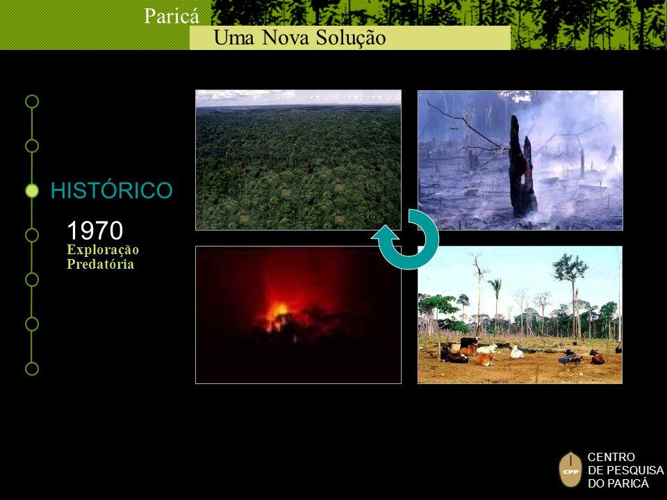 Uma Nova Solução Paricá CENTRO DE PESQUISA DO PARICÁ HISTÓRICO 1990 Atividade Florestal INCERTEZA BUSC A