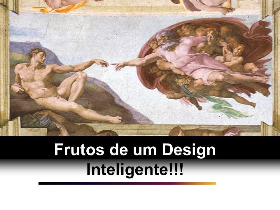 A IMAGEM por trás da imagem A IMAGEM por trás da imagem Criados à Imago Dei (Gn 1.26-27) Criados com um Propósito (Gn 1.28)Criados para nos relacionarmos com o Criador (Gn.