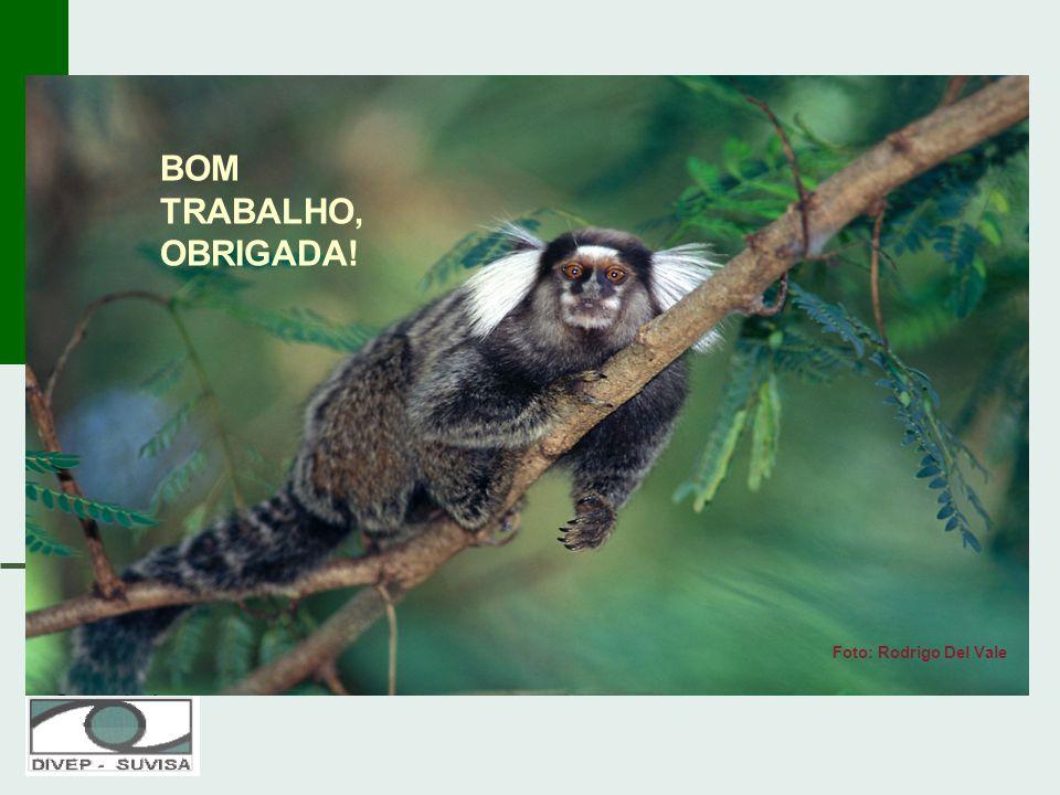 Foto: Rodrigo Del Vale BOM TRABALHO, OBRIGADA!