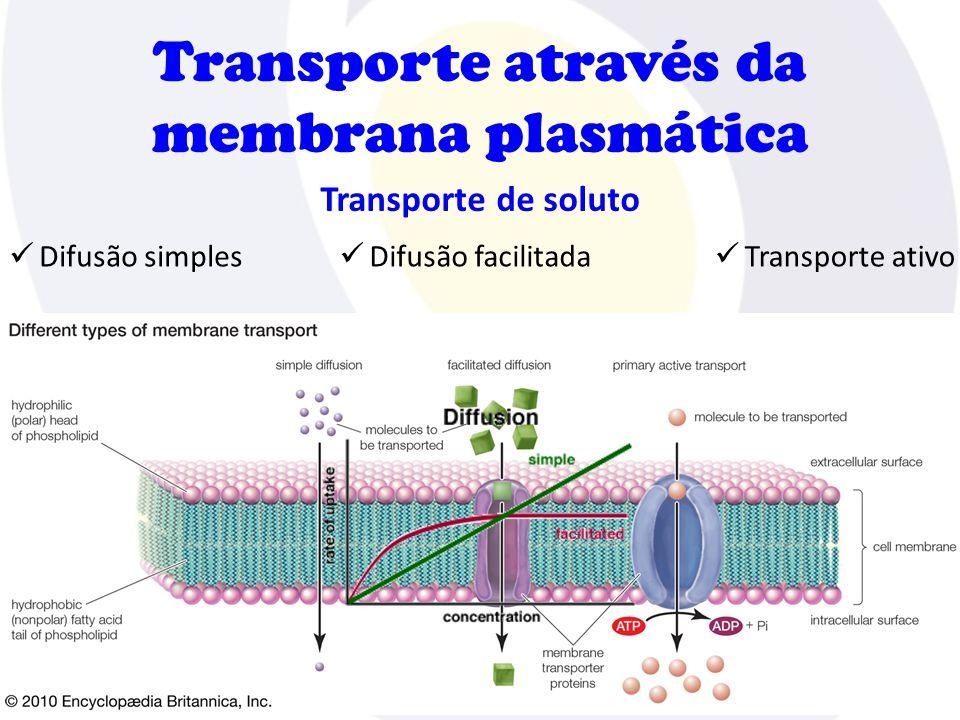 Transporte através da membrana plasmática Transporte de soluto  Difusão simples  Difusão facilitada  Transporte ativo
