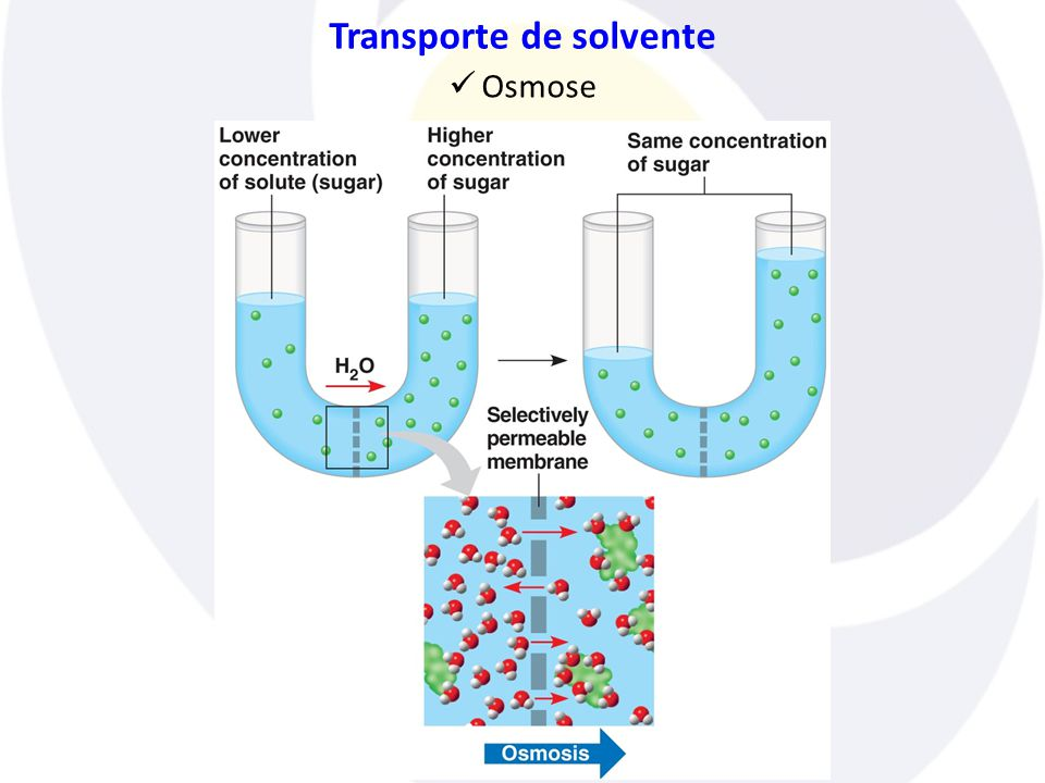 Transporte de solvente  Osmose