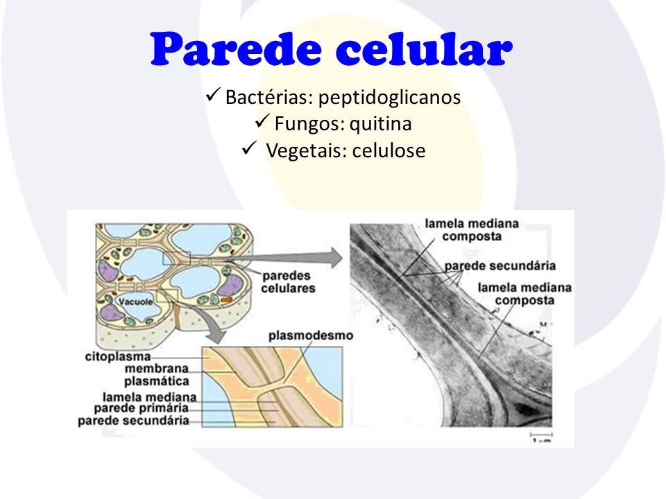 Parede celular  Bactérias: peptidoglicanos  Fungos: quitina  Vegetais: celulose