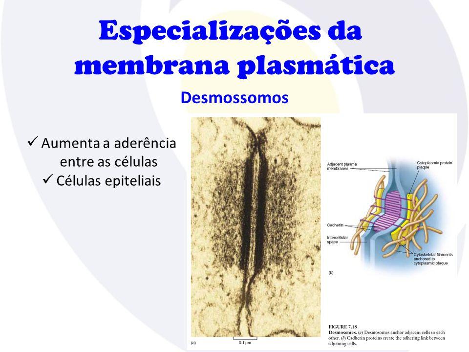 Especializações da membrana plasmática Desmossomos  Aumenta a aderência entre as células  Células epiteliais
