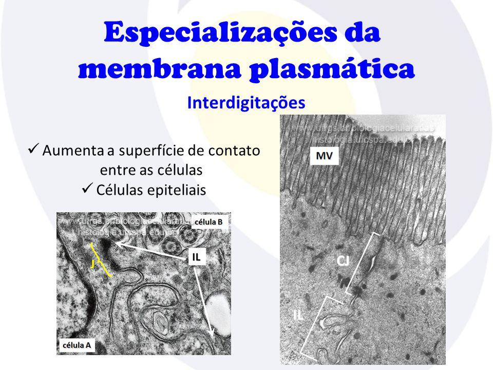 Especializações da membrana plasmática Interdigitações  Aumenta a superfície de contato entre as células  Células epiteliais