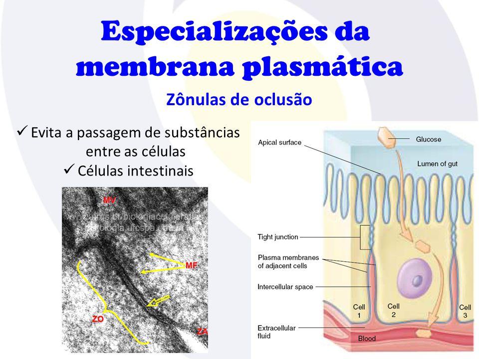 Especializações da membrana plasmática Nexos (junção gap)  Intercâmbio de substâncias  Células musculares cardíacas e células epiteliais