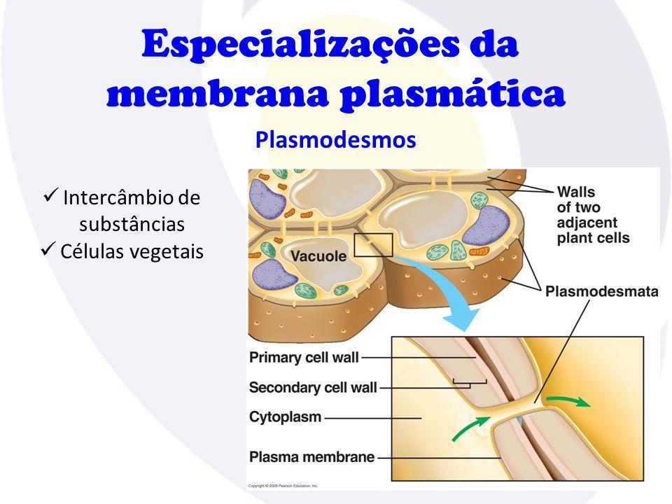 Especializações da membrana plasmática Plasmodesmos  Intercâmbio de substâncias  Células vegetais