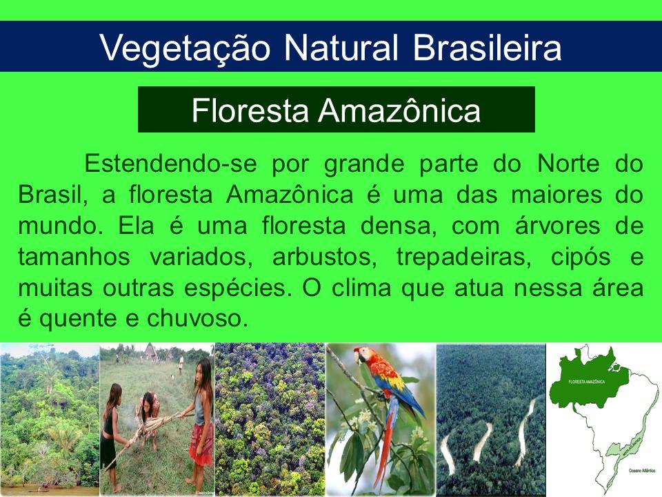 Vegetação Natural Brasileira Floresta Amazônica Estendendo-se por grande parte do Norte do Brasil, a floresta Amazônica é uma das maiores do mundo. El