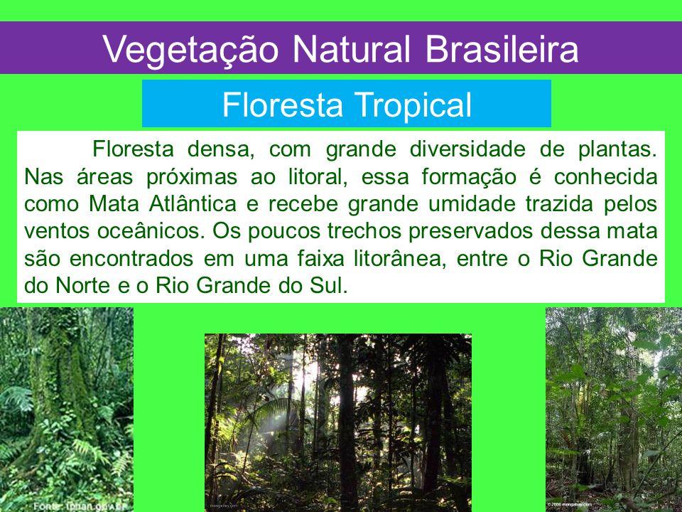 Floresta Tropical Vegetação Natural Brasileira Floresta densa, com grande diversidade de plantas. Nas áreas próximas ao litoral, essa formação é conhe
