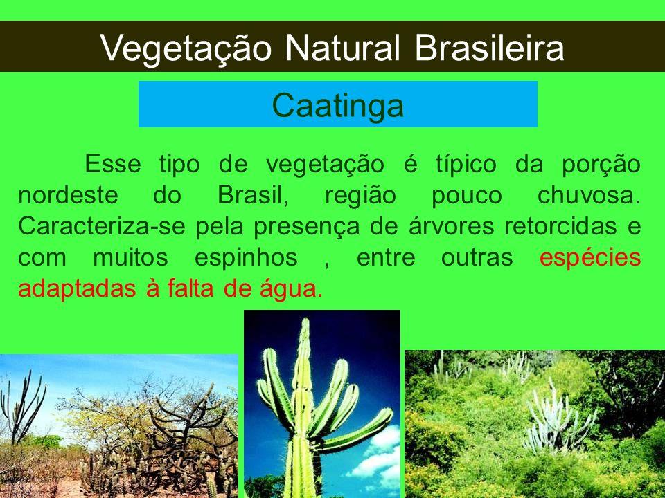 Vegetação Natural Brasileira Caatinga Esse tipo de vegetação é típico da porção nordeste do Brasil, região pouco chuvosa. Caracteriza-se pela presença